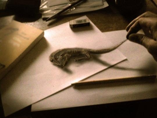 Une salamandre hyper-réaliste dessinée sur deux feuilles, le dessinateurs lui prend la queue, on ne distingue pas le réel du dessiné.