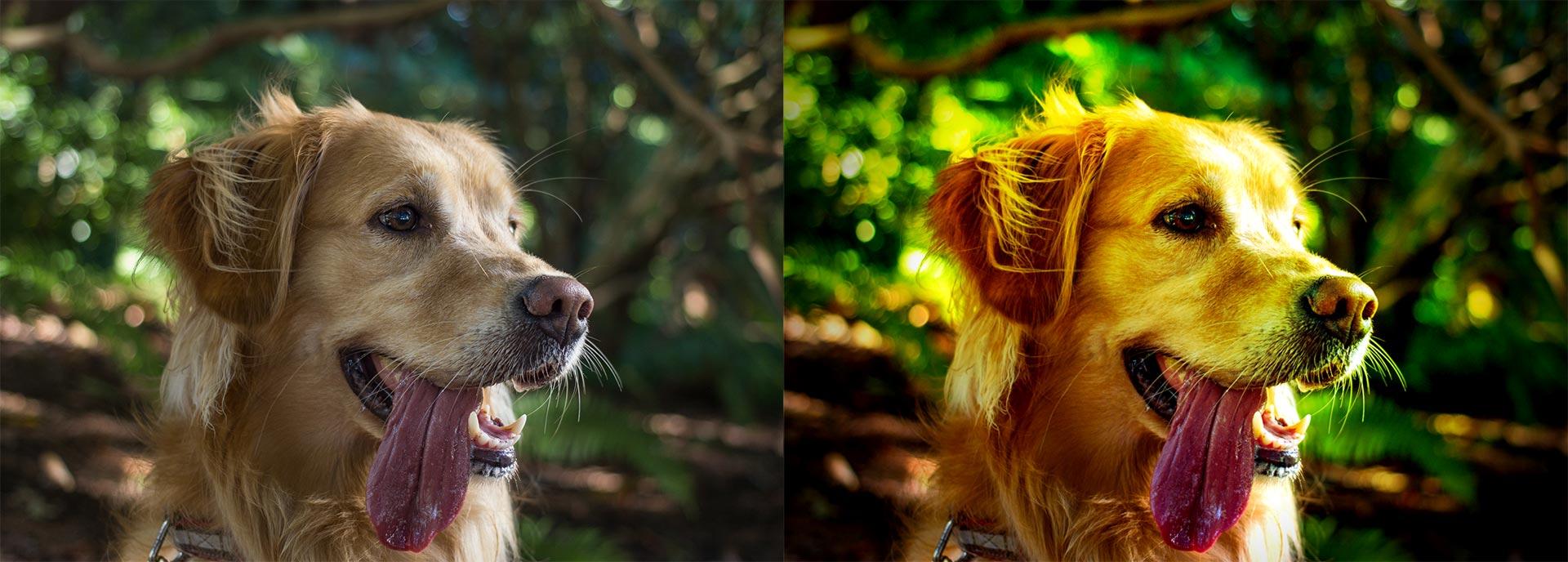 Un chien, l'original à gauche, l'effet lomographie à droite.